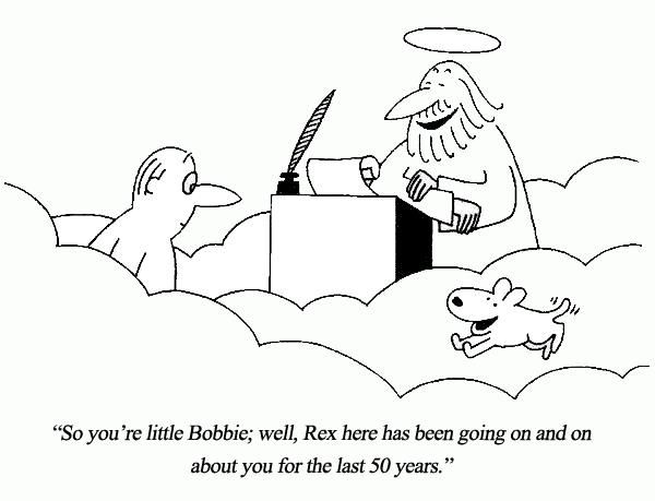 Will we see our pets again in heaven?-pets-heaven-jpg