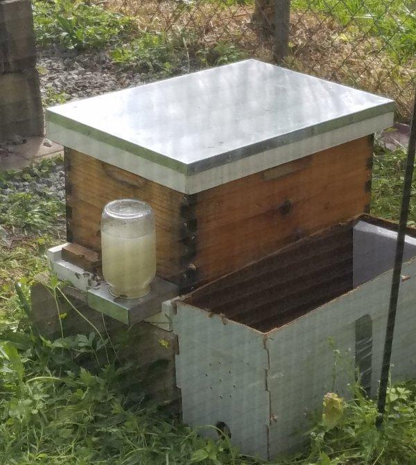 My little homestead-swarm-04112018-home-2-jpg