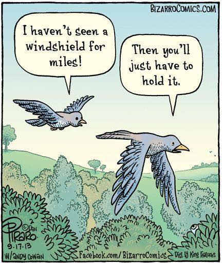 Funny Pictures, Sayings and Cartoons-xx-jpg