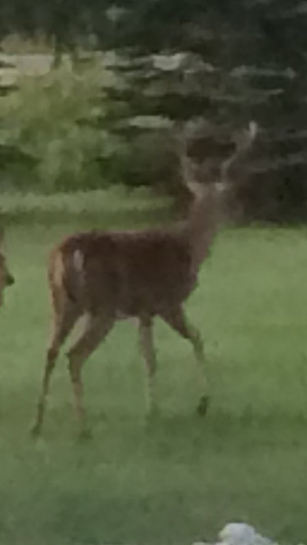 Wildlife in your yard-078f1f3a-9f3d-4f43-8c63-6a6ce62fa1f6-jpg