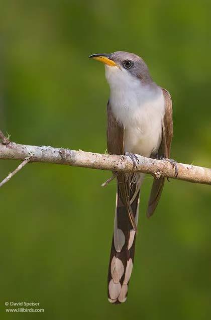 Bird Feeders-49085bf8-4fba-4969-aa89-45b95ff4df6e-jpeg