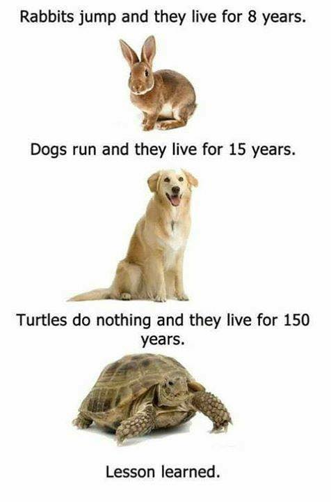 Funny Pictures, Sayings and Cartoons-jpg