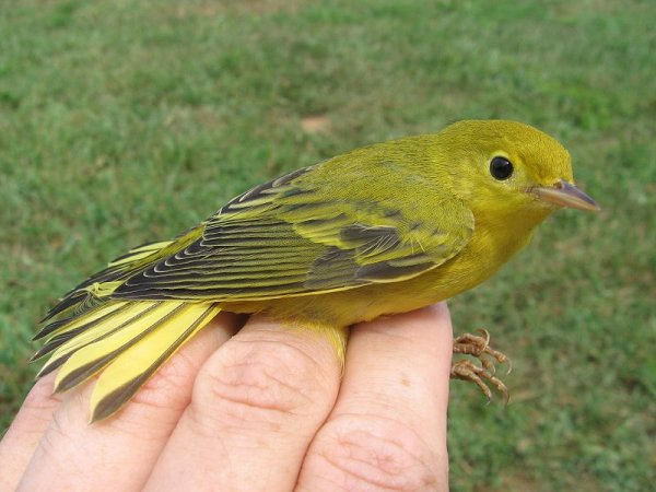 Bird Feeders-0f85a82c-5c4d-43cf-bf75-ea076e5440f8-jpg