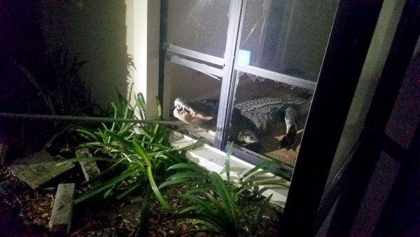Elderly woman finds 11 foot alligator in kitchen-alligator-kitchen-02-ht-jef-190531_hpembed_16x9_992-jpg