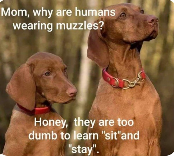 Funny Pictures, Sayings and Cartoons-xccc-jpg