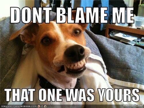 Fun pet related memes-aa07f44b-3f5b-41a1-b2a3-ada96e1f615d-jpeg